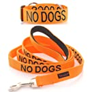 """NO DOGS"" Color Coded Orange Semi-Choke Dog Collar & 4 Foot Leash Set (Not Good With Other Dogs) PREVENTS Accidents By Warning Others of Your Dog in Advance!"