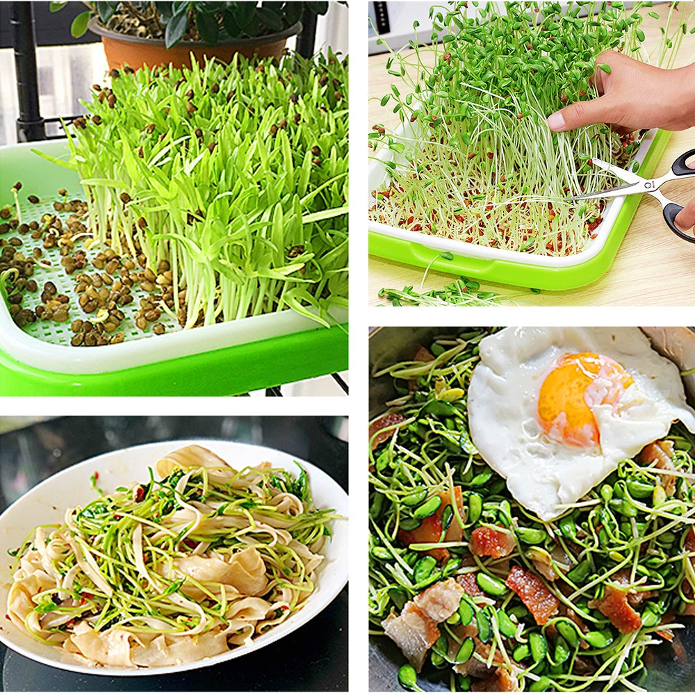 Seed Sprouter Trays with 4 Layers Shelf Soil-Free Healthy Wheatgrass Seeds Grower & Storage Trays for Garden Home by LeJoy Garden (Image #4)