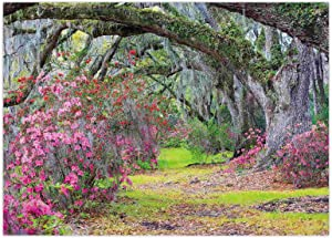 Funnytree 7x5FT Spring Forest Backdrop Pink Flower Tree Nature Landscape Garden Park Scenery Background Baby Shower Birthday Party Decor Banner Supplies Studio Photography Photo Booth Prop Gift