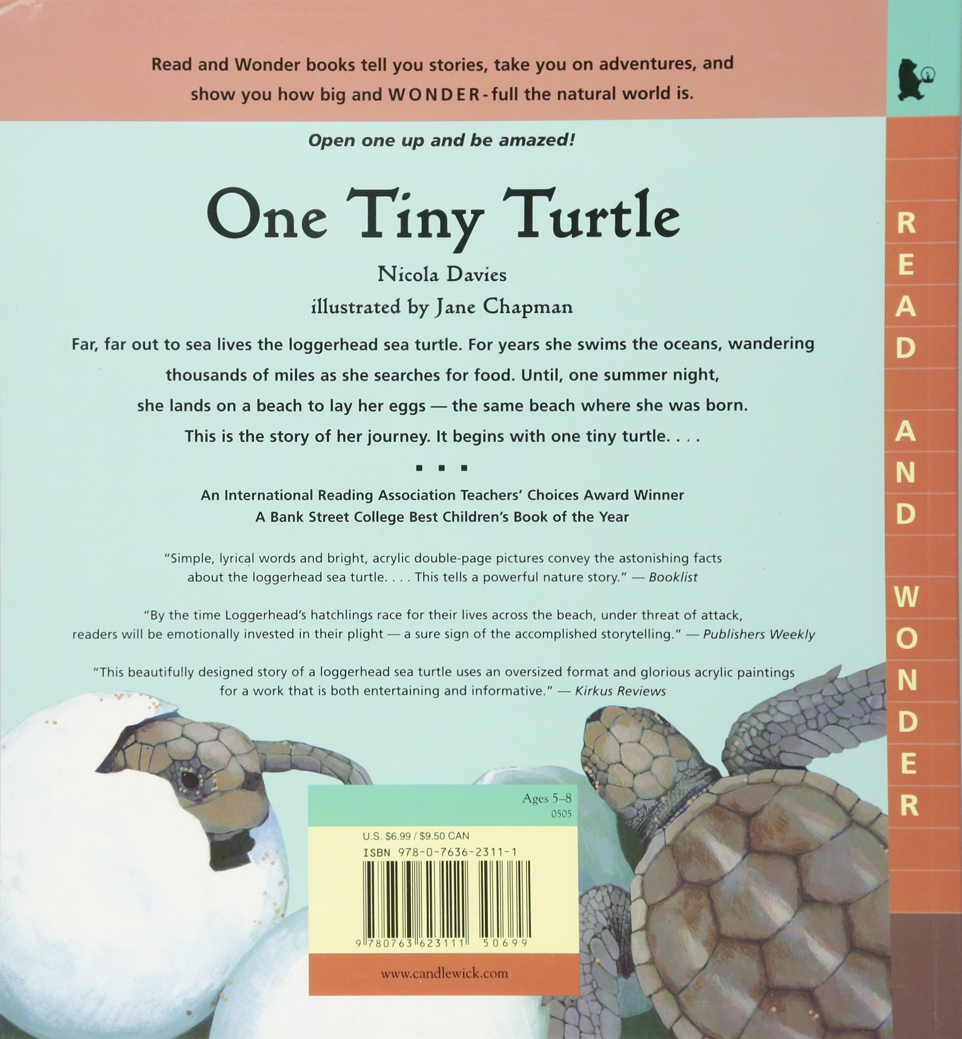 one tiny turtle read and wonder nicola davies jane chapman