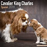 amazon cavalier king charles spaniel calendar 2018 square