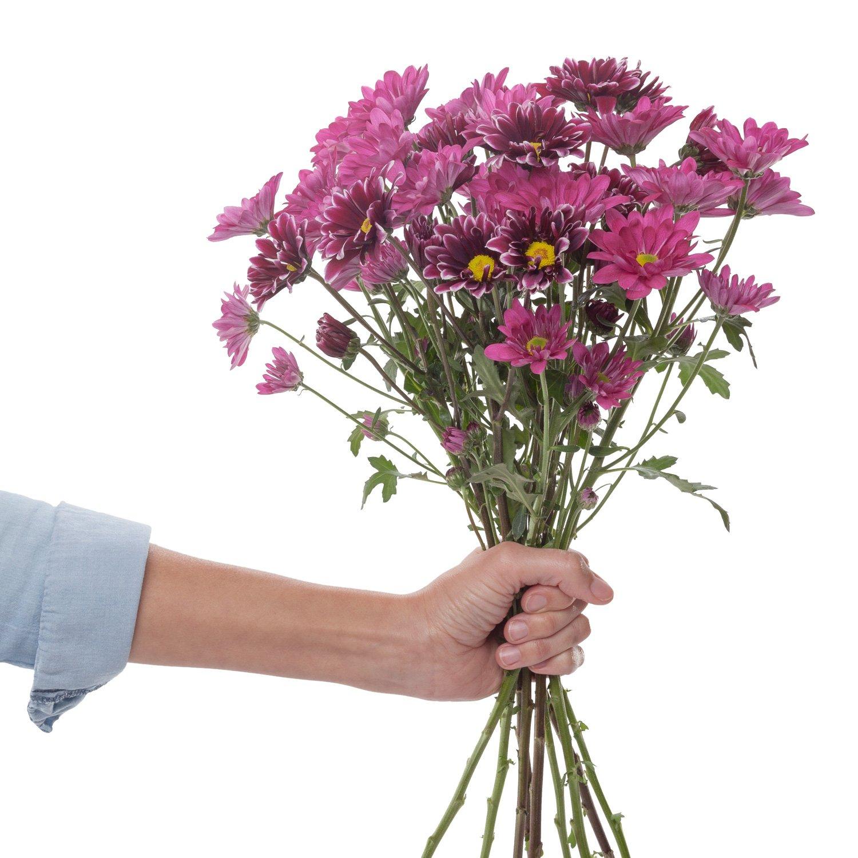 Chrysanthemums | Purple - 80 Stem Count by Flower Farm Shop