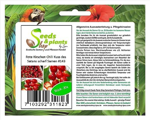 20 rojo cerezas Chile beso el diablo caliente semillas vegetales ...