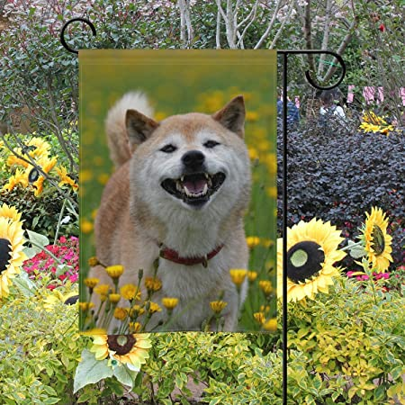 MyDaily Shiba Inu - Bandera Decorativa de Doble Cara para Jardín ...