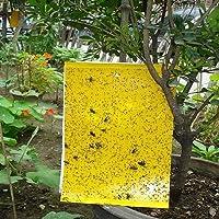 Plai 30 Stück (großformatig 20x25cm) Beidseitig Gelbtafeln Gelb-Sticker Fliegenfänger Sticker inkl. 30 Kabelbinder