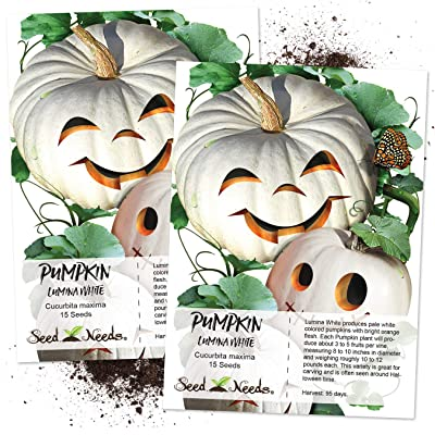 Seed Needs, Lumina White Pumpkin (Cucurbita Maxima) Twin Pack 15 Seeds Each Non-GMO : Pumpkin Plants : Garden & Outdoor
