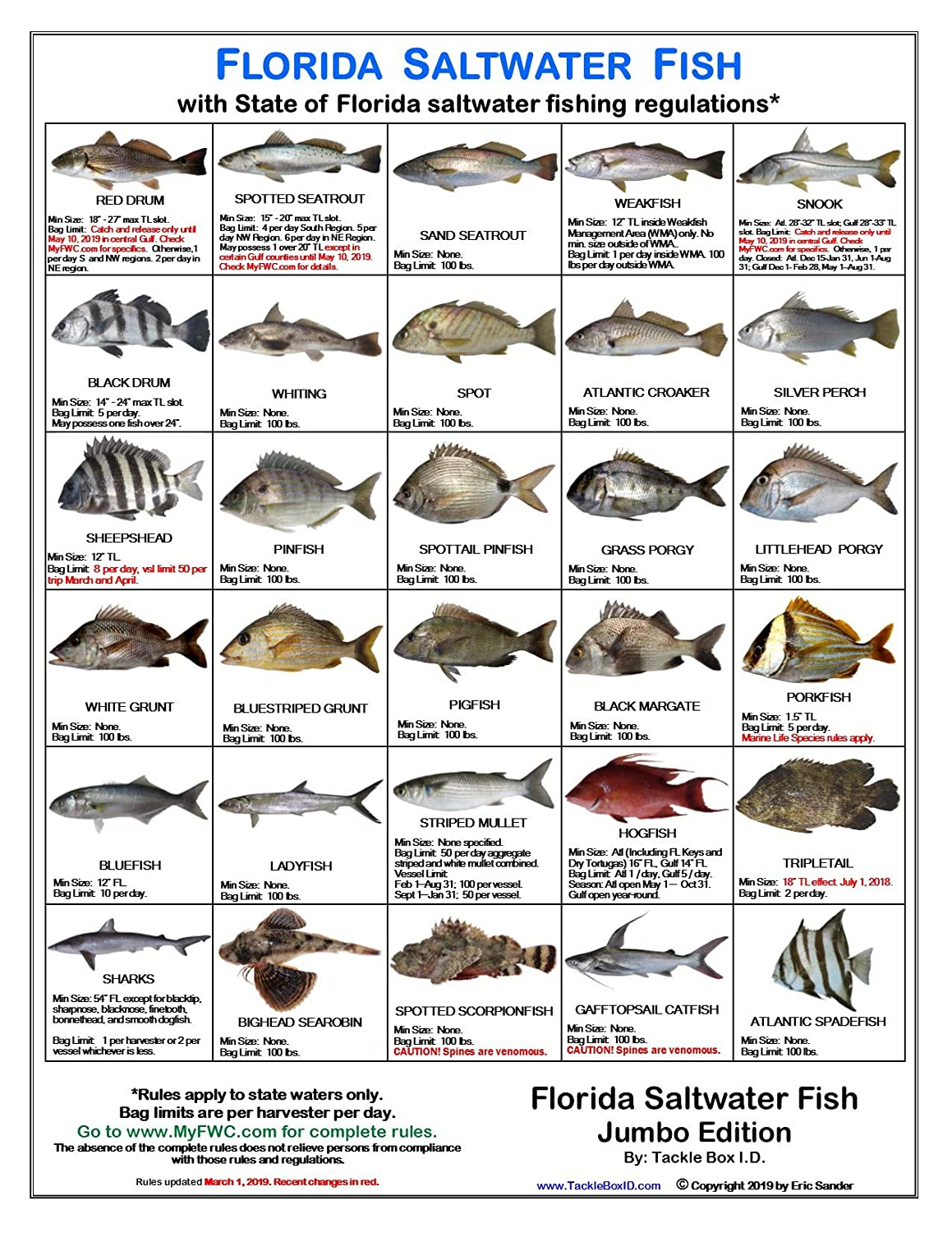 Amazon com tackle box i d florida saltwater fish identification