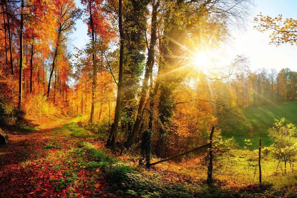 Gorgeous Forest Autumn Fall Leaves Seasons Changing Nature Landscape Panorama Photo Cool Wall Decor Art Print Poster 36x24