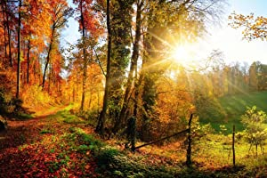 Gorgeous Forest Autumn Fall Leaves Seasons Changing Nature Landscape Panorama Photo Cubicle Locker Mini Art Poster 12x8