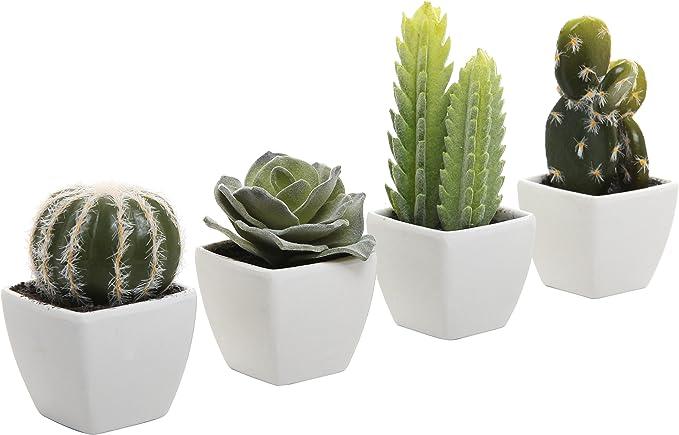 Macetas para cactushttps://amzn.to/2XTO0DX
