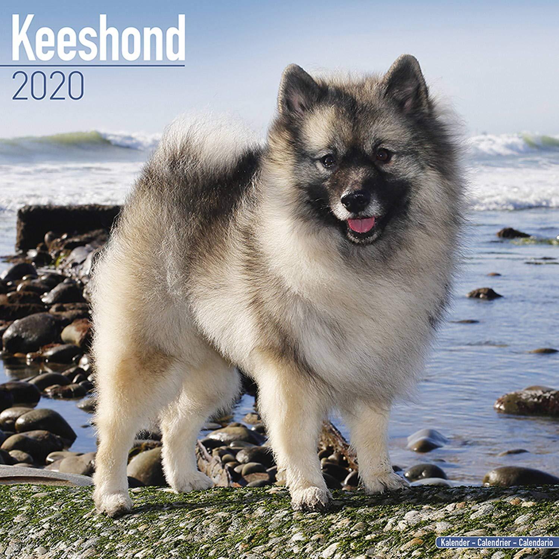 Euro 2020 Nice Calendrier.Keeshond Calendar 2020 Dog Breed Calendar Wall Calendar 2019 2020