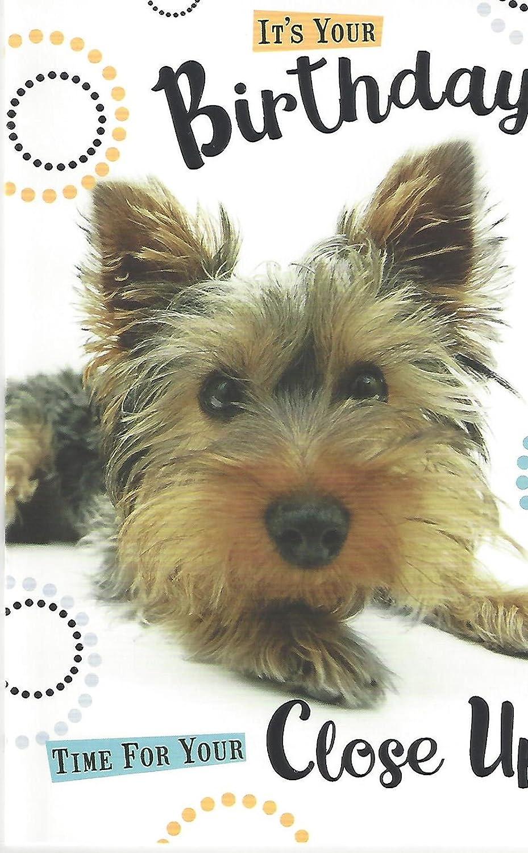 Happy Birthday Cute Yorkshire Terrier Puppy Hund Karte Amazon De