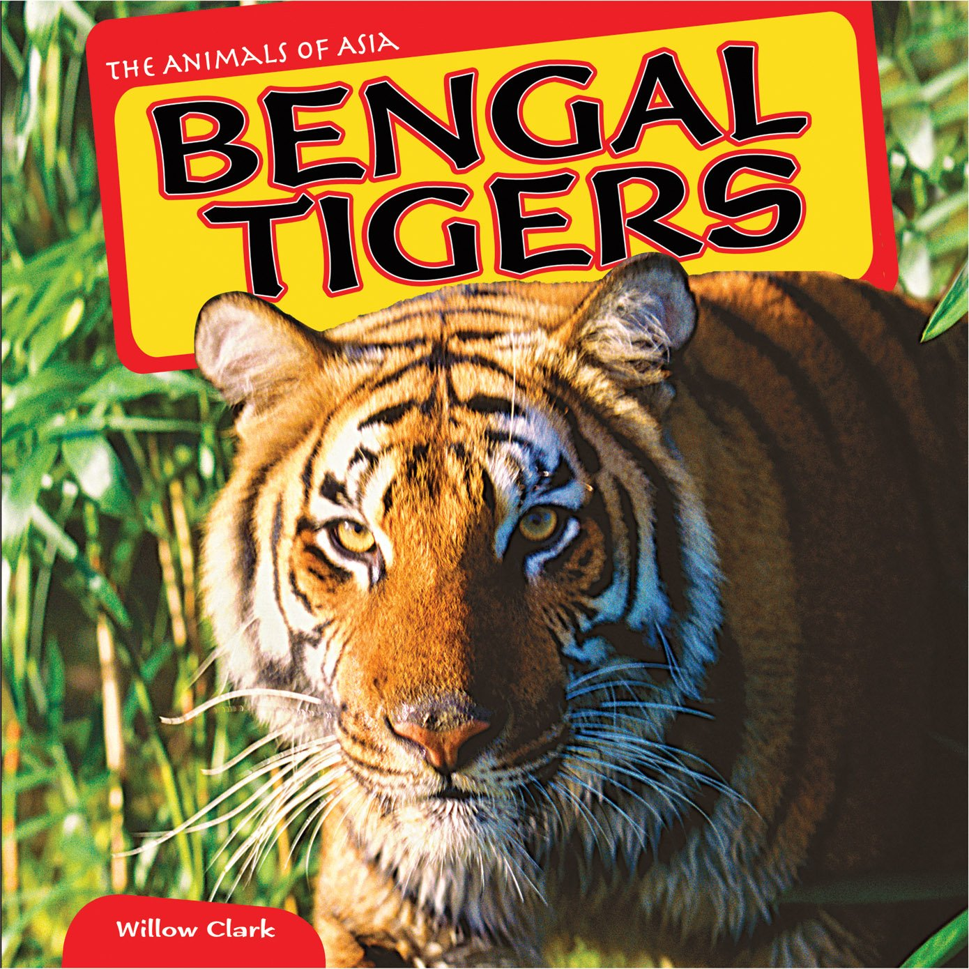 Bengal Tigers (The Animals of Asia)