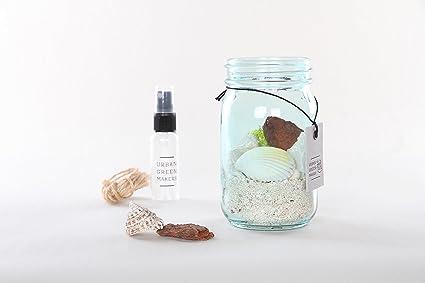 Amazon Com Glass Jar Terrarium Diy Kit Includes Mixed Shells