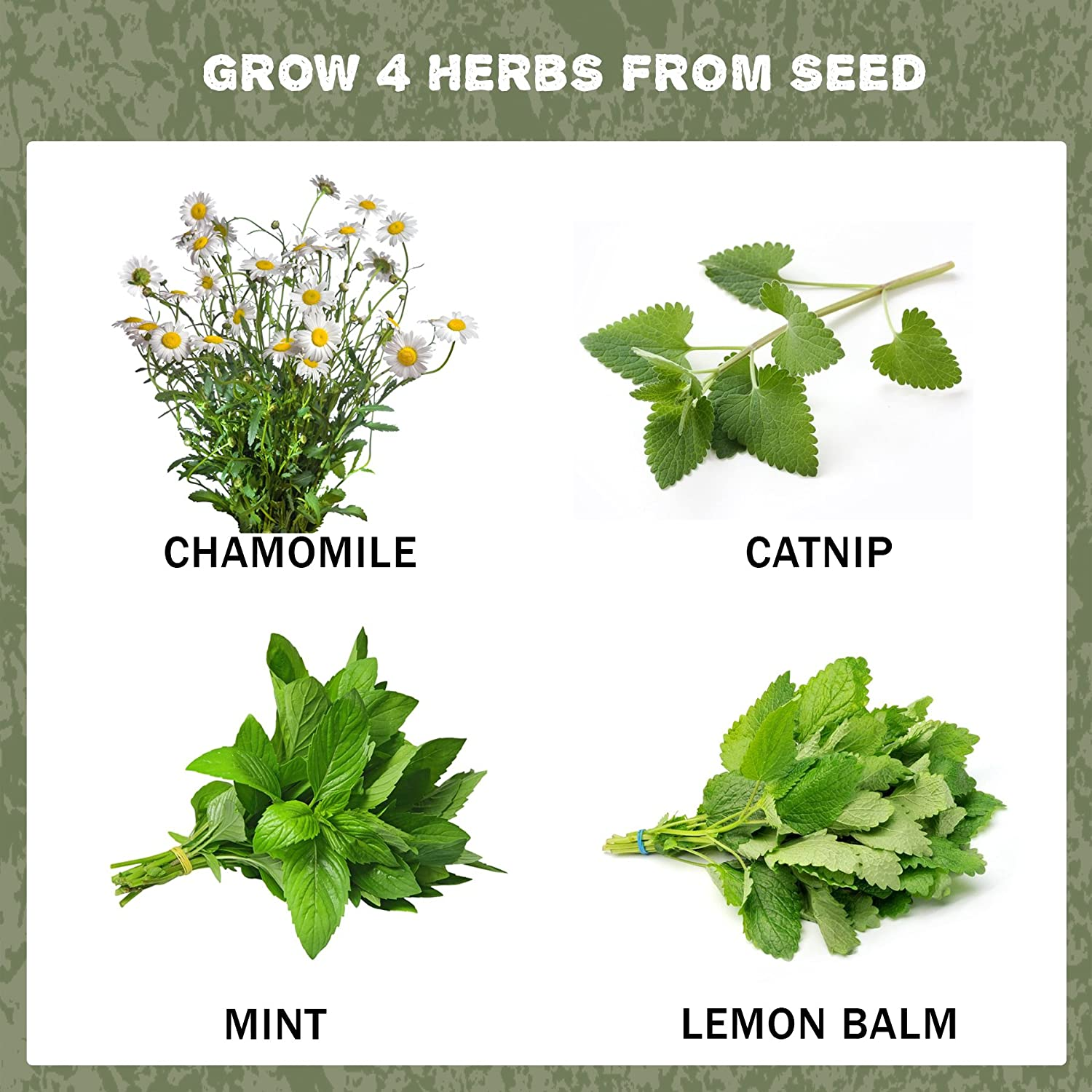 Seeds, seedlings, herbs: a selection of sites