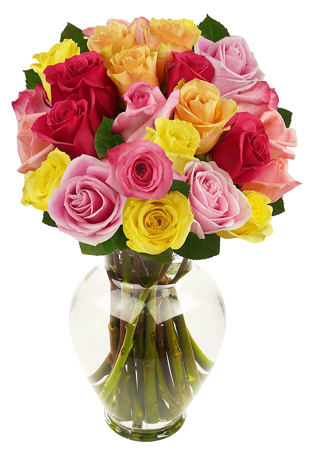 Amazon benchmark bouquets 2 dozen rainbow roses with vase amazon benchmark bouquets 2 dozen rainbow roses with vase grocery gourmet food izmirmasajfo