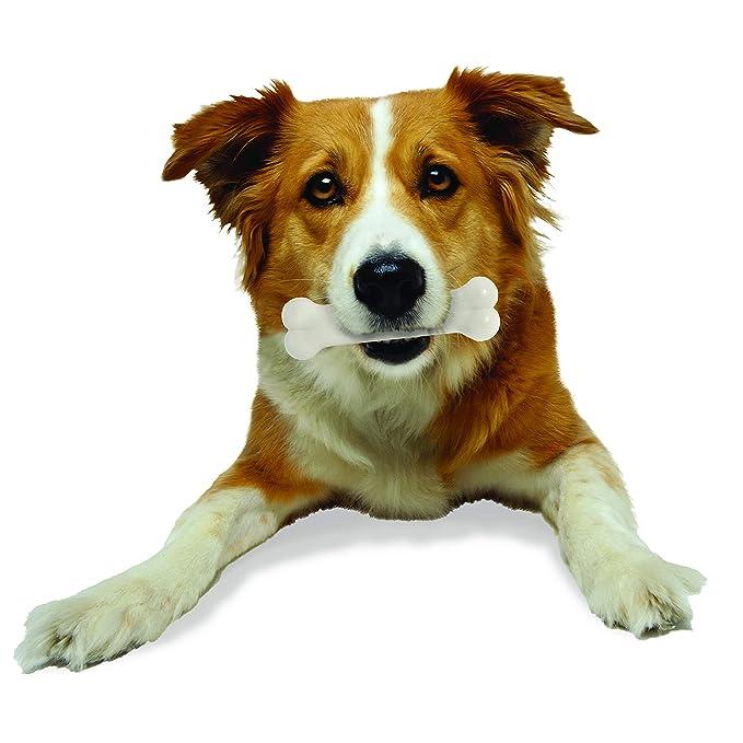 Nylabone Dura Chew - Extra pequeño, pollo, talla M: Amazon.es: Productos para mascotas