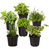 The Three Company 1 Pint (Mint, Lemon Balm, Oregano, Rosemary, Sage, Other Assorted Herbs) (6 Per Pack), Aromatic and Edible,