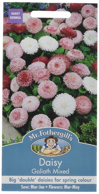 Mr fothergills 13521 bellis goliath mixed flower seeds amazon mr fothergills 13521 bellis goliath mixed flower seeds amazon garden outdoors izmirmasajfo