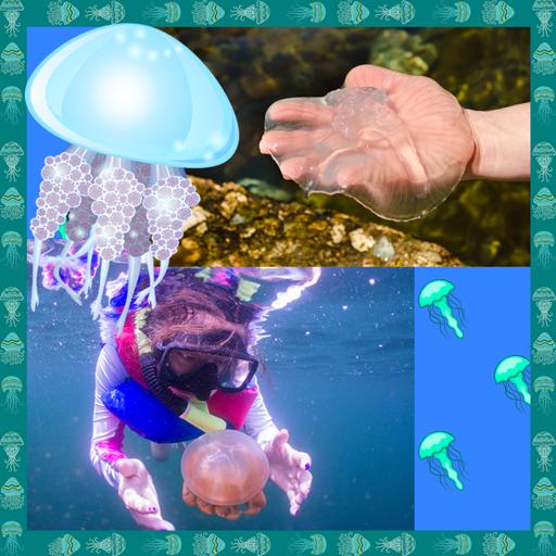 Jellyfish Photo Collage