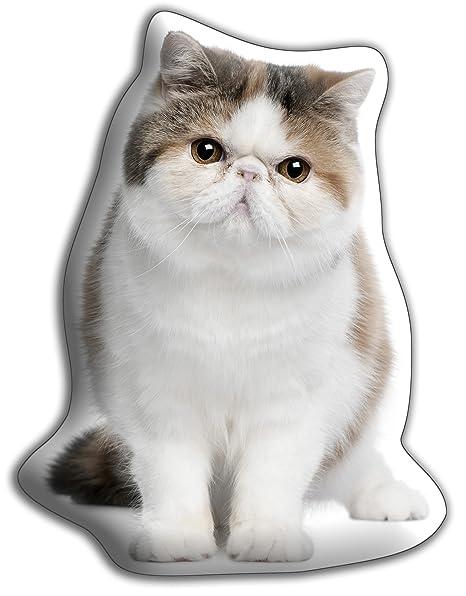 Amante de los gatos regalo – hermosa gran exótico de pelo Cuddle cojín – lujo strokable