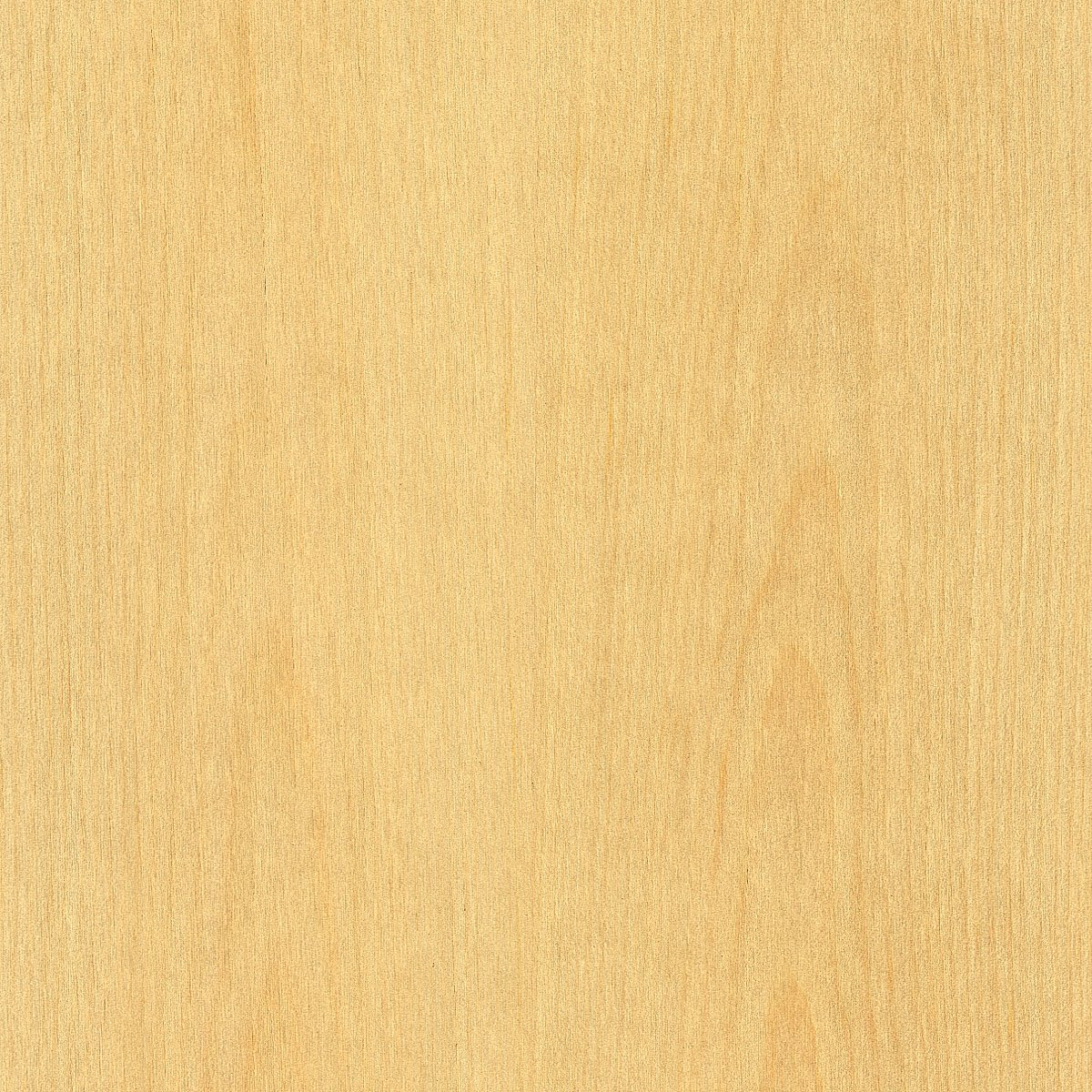 Pine Wood Veneer Clear 4x8 10 mil(Paperback) Sheet