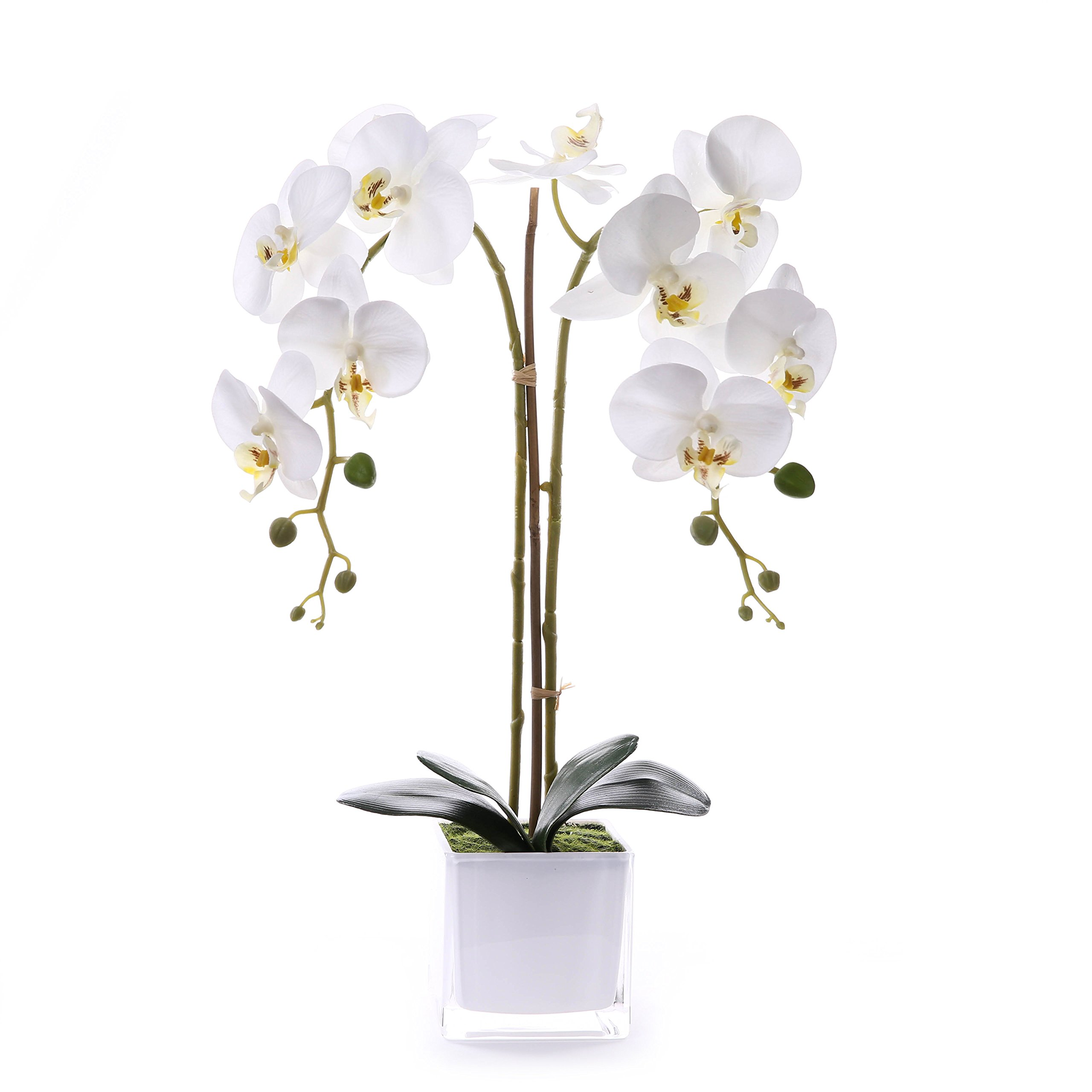 Livilan Silk Butterfly Orchid in Mirrored Vase Tall Artificial Flower Arrangements for Home Room Office Wedding Party Centerpiece Decor, White by Livilan