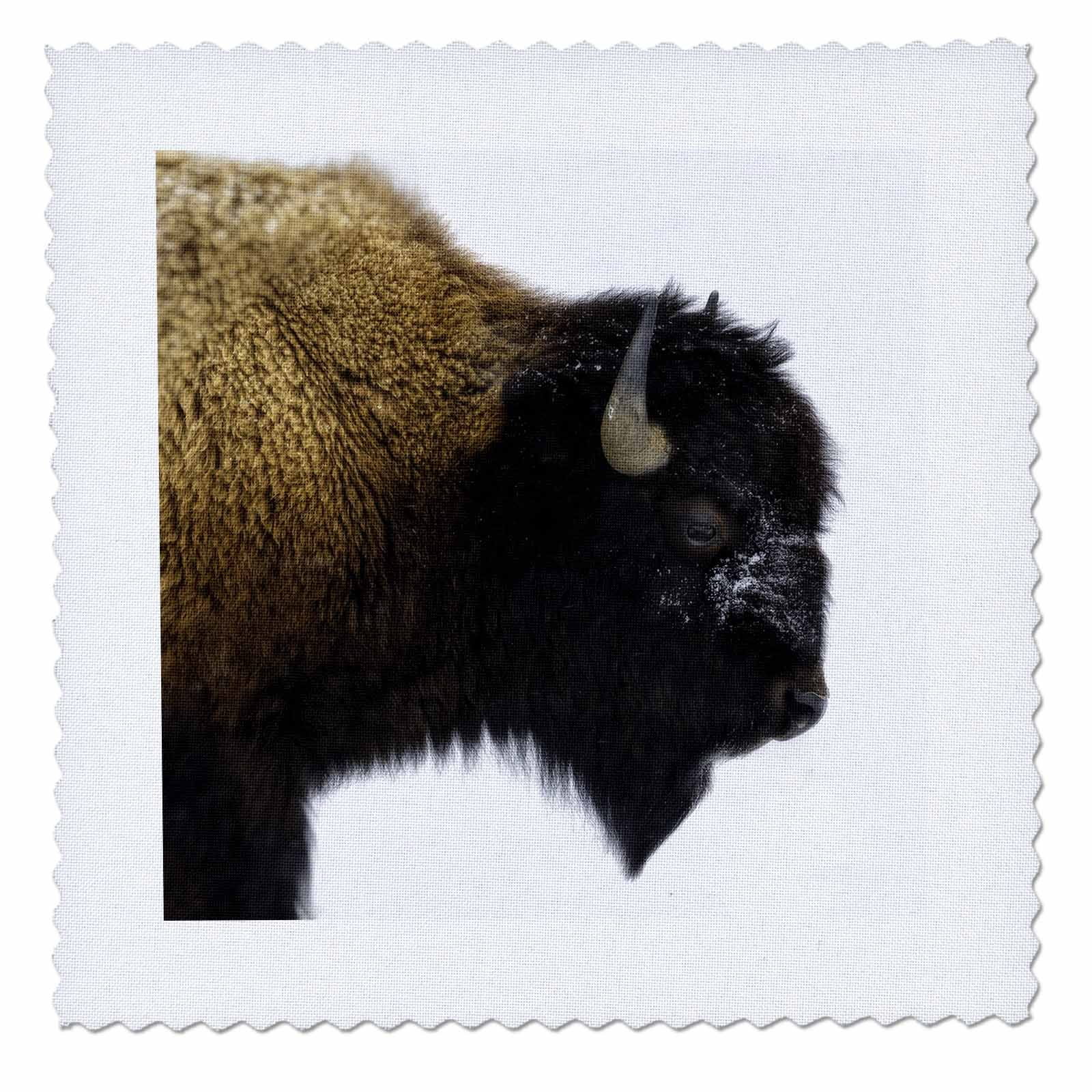 3dRose Mike Swindle Photography - Animals - Bison Portrait - 18x18 inch quilt square (qs_280204_7)