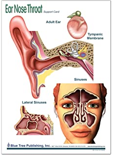 Amazon.com: Ear Nose Throat Anatomy Poster 12x17inch, Otolaryngology ...