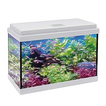 ICA KDI50B Kit Aqua-Led 50 con Filtro Interior, Crema: Amazon.es: Productos para mascotas