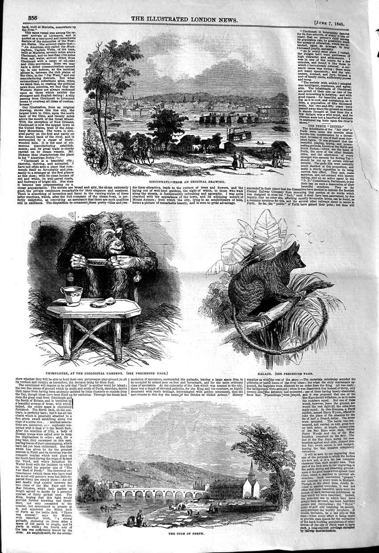 Old Antique Print 1845CINCINNATI Chimpancé Galago pulgada PERTH puente
