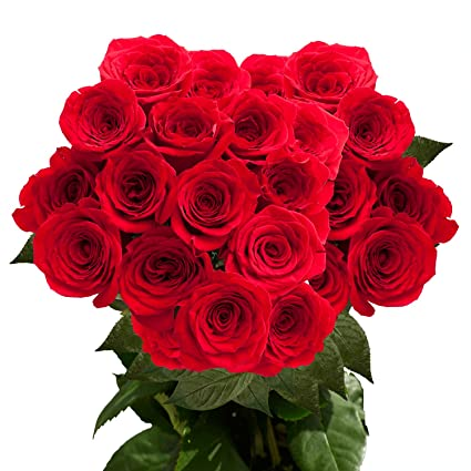 GlobalRose 50 Red Roses, Beautiful Flower, Natural Lons Stems and Large  Blooms