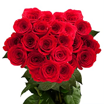 GlobalRose 100 Fresh Cut Red Roses Long Stem