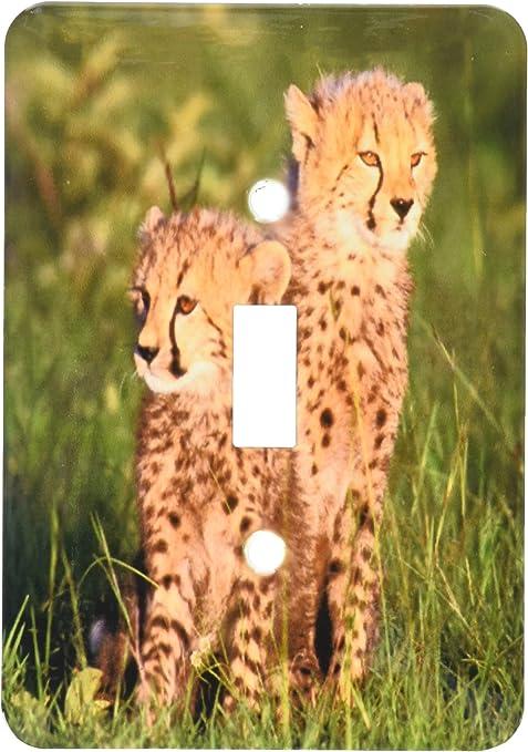 3dRose LSP/_71043/_1 Kenya Masai Mara National Reserve Two Cheetahs Single Toggle Switch