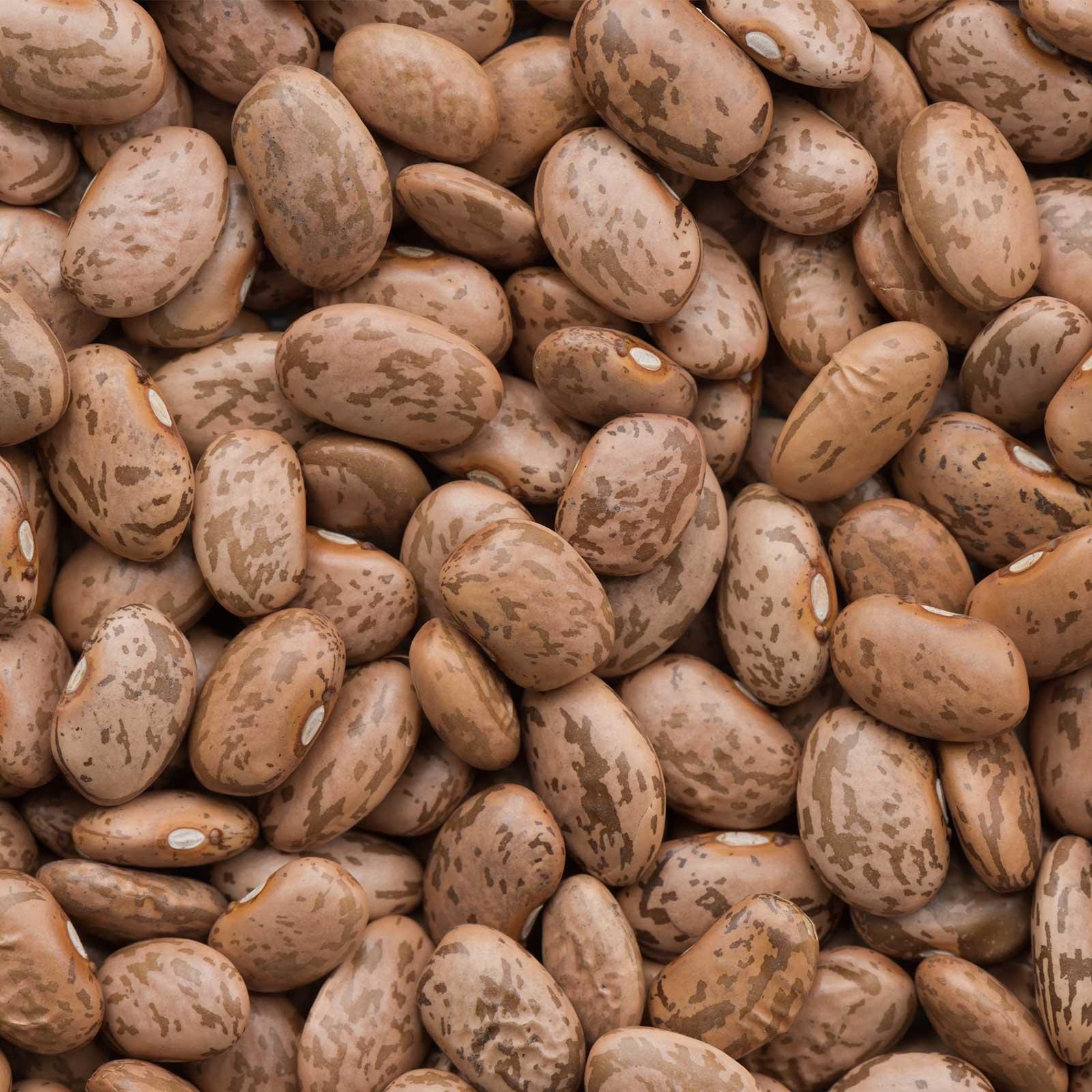 Pinto Bean Seeds - 50 Lb Bulk - Also Called Shell Pinto or Shelling Pinto - Non-GMO, Heirloom - Vegetable Garden Seeds
