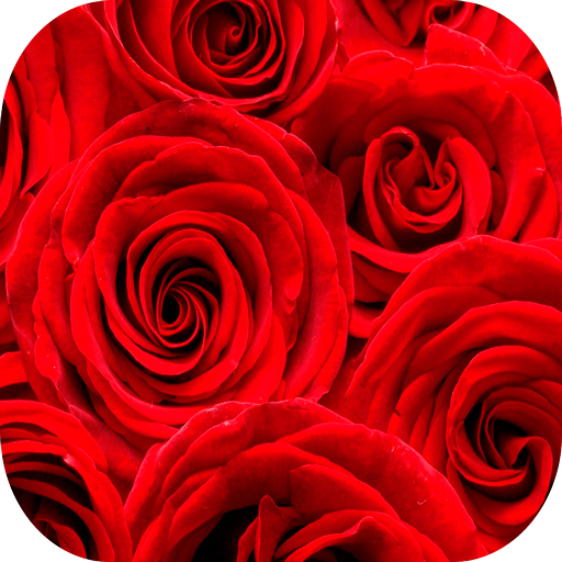 Rosas Wallpapers HD