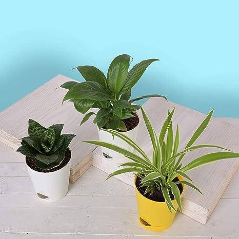 Baby https://newquayinbloom.co.uk/ plants.com