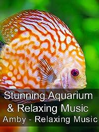 Stunning Aquarium & Relaxing Music – Amby – Relaxing Music