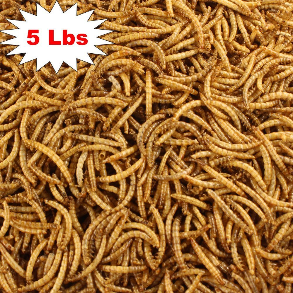 Yummy Mealworms-5 Lbs Pouch Natural Organic Dried Mealworms Free Delivery