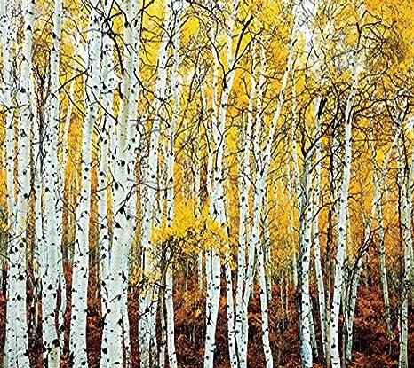 Aspen Grove Autumn Fall Trees Professional Photograph Print Photo Poster Canvas
