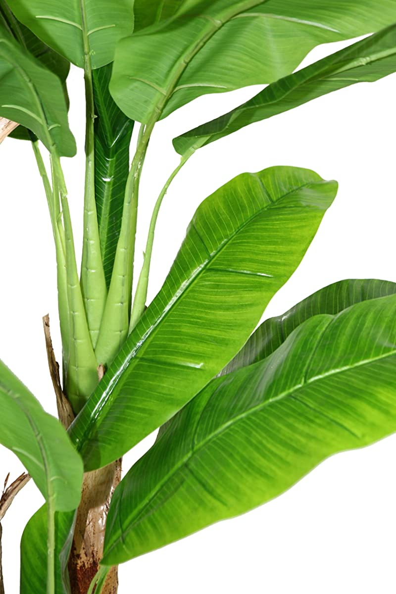 Laura Ashley 72 Inch Tall Banana Tree with Real Touch Leaves
