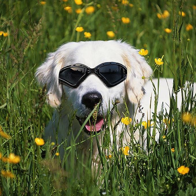 Amazon.com: Anteojos de sol con protección UV para ...