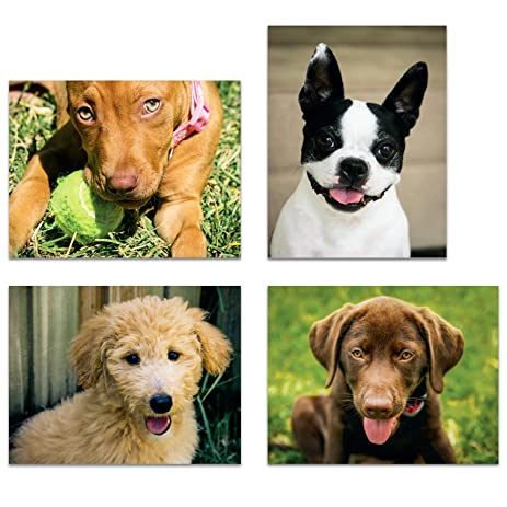 dog themed note cards variety pack of 16 dog greeting cards - Dog Greeting Cards