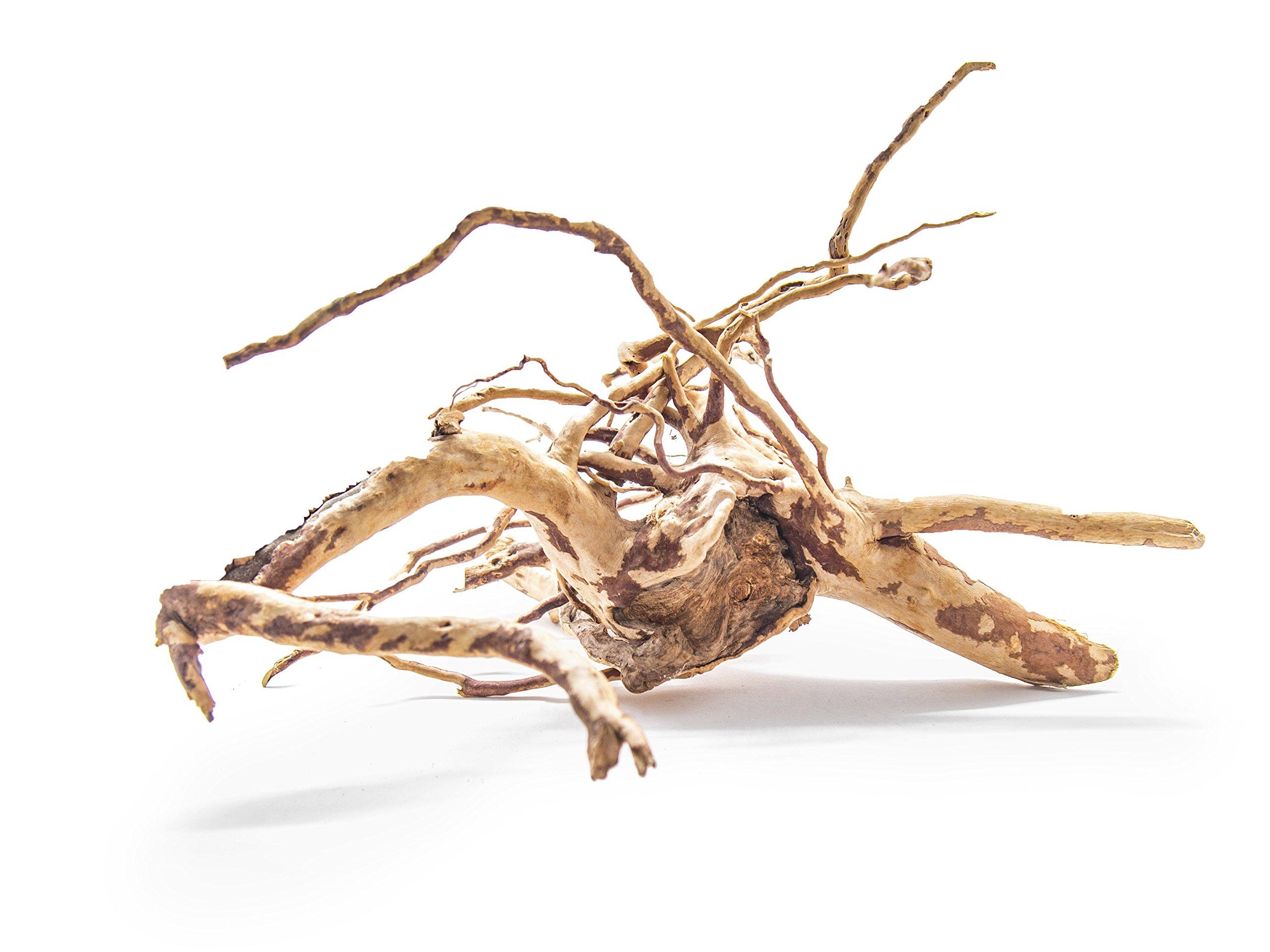 Aquatic Arts 1 Medium Sized Piece of Spider Wood aka Azalea Wood Natural Aquarium Driftwood, 9-12'' by Aquatic Arts