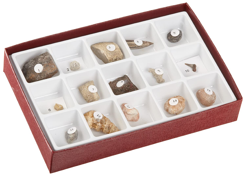 Hubbard scientifique 3115-S M-sozo-que Fossiles Collection American Educational