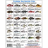 Tackle Box I.D. Florida Saltwater Fish Identification Card Set - Three Doublesided Waterproof Cards Showing 60 Common Fish an