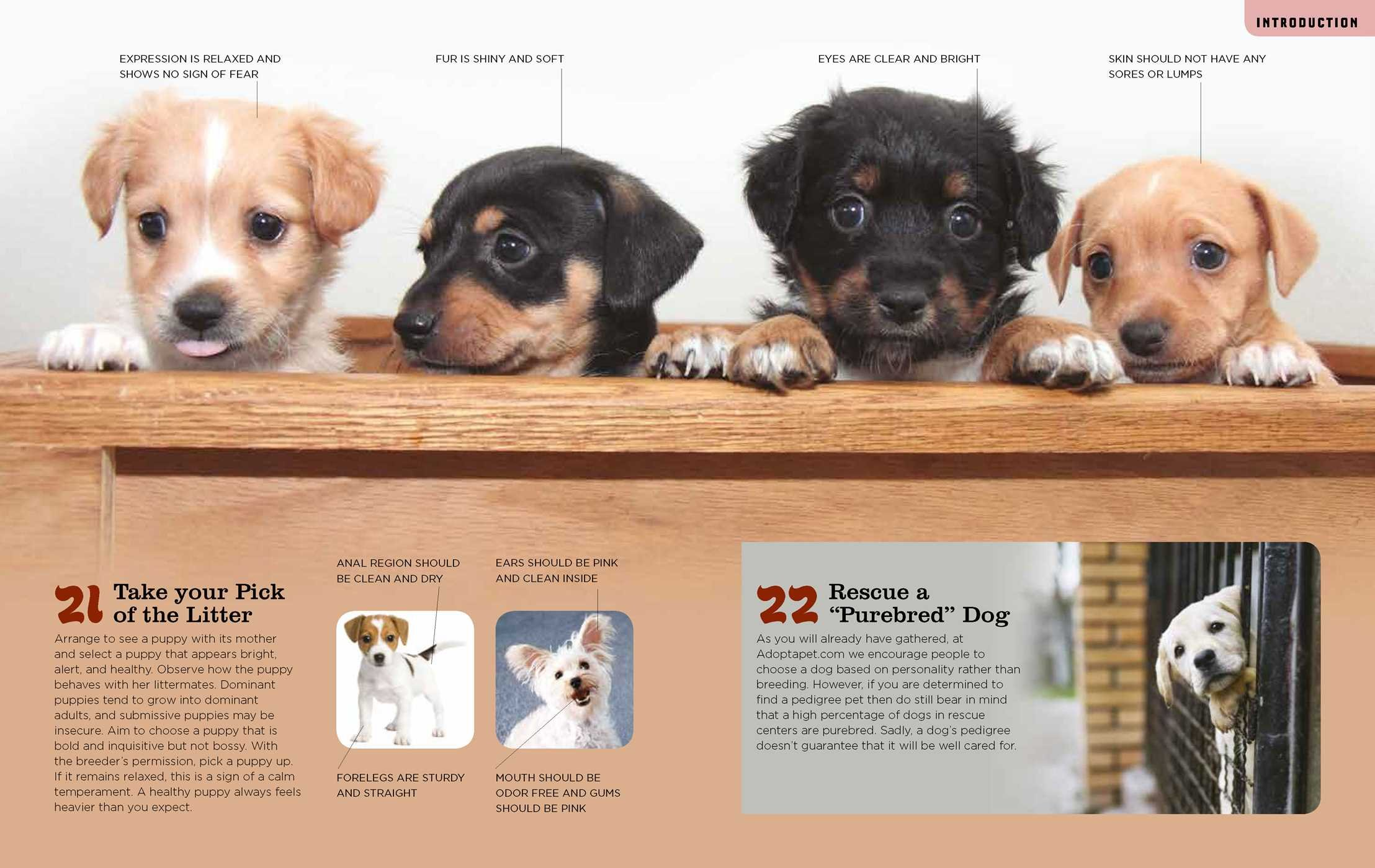 total dog manual adopt a pet com meet train and care for your