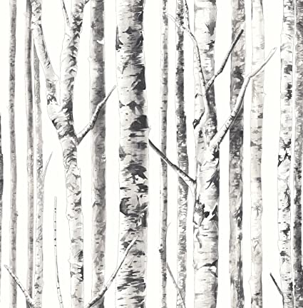 White Birch Tree Wallpaper Forest With Gray Silver Black Amazoncom