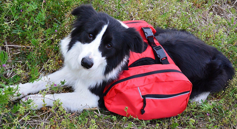 BINGPET Dog Harness Backpack Doggie Saddlebags by BINGPET (Image #5)