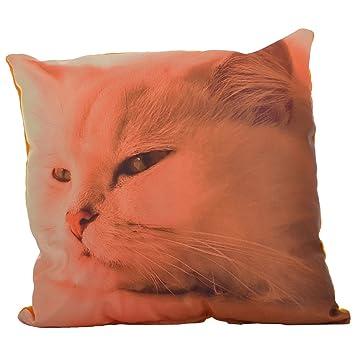 Twisha Cat Printed Pillow 12 X 12 X 4 Inch